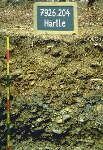 Musterprofil eines stark geröllhaltigen, nach unten dunkler werdenden Bodens. Rechts sind die einzlenen Horizonte eingezeichnet, links befindet sich ein Maßstab. Über dem Profil ist eine Kreidetafel mit Beschriftung.