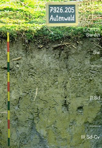Musterprofil eines dunkelgrauen, leicht grünlichen Bodens. Rechts sind die einzlenen Bodenhorizonte eingezeichnet, links befindet sich ein bunter Maßstab. Über dem Profil ist eine Kreidetafel mit Beschriftung.