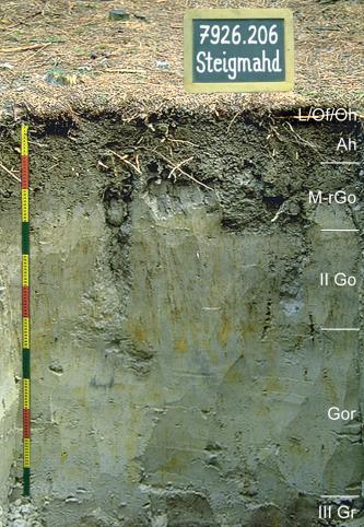 Musterprofil eines grauen, teilweise leicht grünlichen Bodens. Rechts sind die Horizonte eingezeichnet, links befindet sich ein bunter Maßstab und über dem Profil eine Kreidetafel mit Beschriftung.