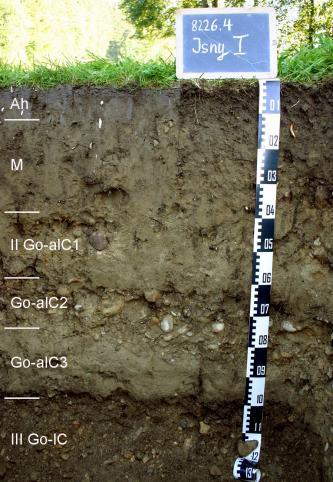 Ungefähr 1,30 m mächtiges Musterprofil eines Bodens. Dieser ist die oberen drei Viertel braun-grau und darunter dunkelbraun. Bei etwa 70 cm befindet sich ein geröllhaltige Schicht. Links sind die Horizonte eingezeichnet, rechts ein Maßstab.