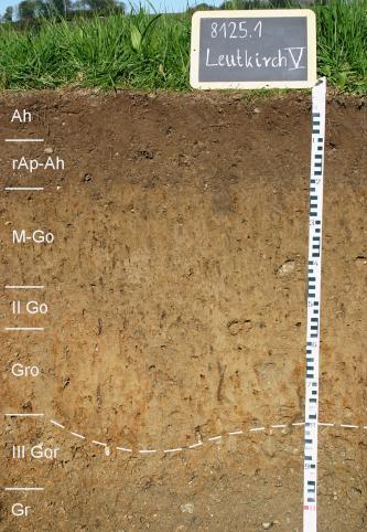 Das Foto zeigt ein Bodenprofil unter Ackerpflanzen. Es handelt sich um ein Musterprofil des LGRB. Das in sieben Horizonte gegliederte Profil ist mehr als 1 m tief.