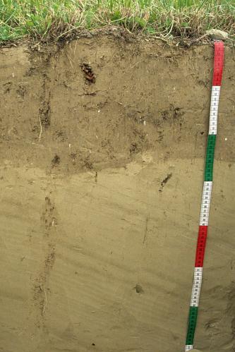 Das Foto zeigt ein Bodenprofil unter Grünland. Es handelt sich um ein Musterprofil des LGRB. Das gelblich braune Profil ist 70 cm tief.