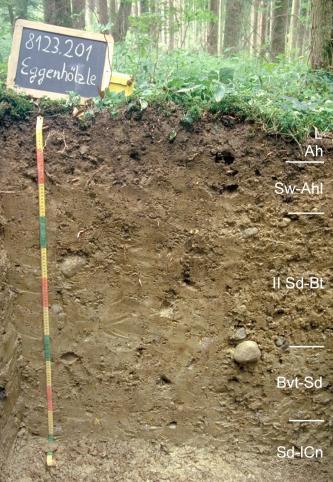 Das Bild zeigt ein Bodenprofil unter Wald. Es handelt sich um ein Musterprofil des LGRB. Das fünf Horizonte umfassende Profil ist 1,30 m tief.