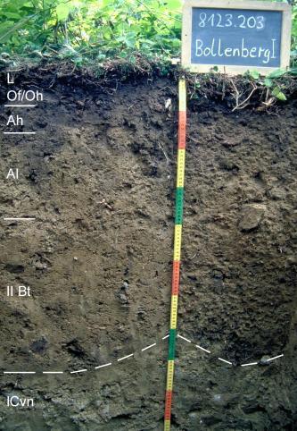 Das Bild zeigt ein Bodenprofil unter Grünpflanzen. Es handelt sich um ein Musterprofil des LGRB. Das fünf Horizonte umfassende Profil ist 1 m tief.