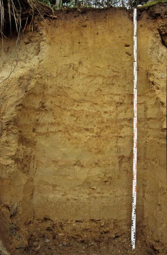 Das Foto zeigt ein Bodenprofil unter Wald. Es handelt sich um ein Musterprofil des LGRB. Das Profil ist über 2,40 m tief.