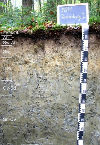 Das Bild zeigt ein Bodenprofil unter Wald. Es handelt sich um ein Musterprofil des LGRB. Das graugelbe, sieben Horizonte umfassende Profil ist 1,10 m tief.