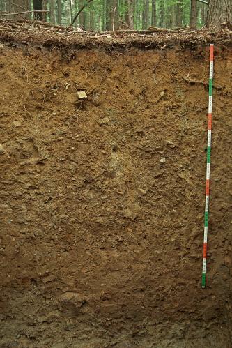 Das Bild zeigt ein Bodenprofil unter Wald. Es handelt sich um ein Musterprofil des LGRB. Das dunkelbraune Profil ist etwa 1,80 m tief.