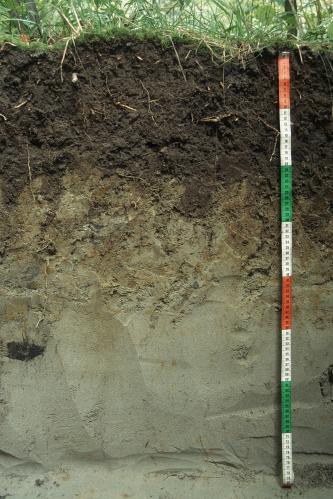 Das Foto zeigt ein Bodenprofil unter Grünland. Es handelt sich um ein Musterprofil des LGRB. Das Profil ist etwa 80 cm tief.