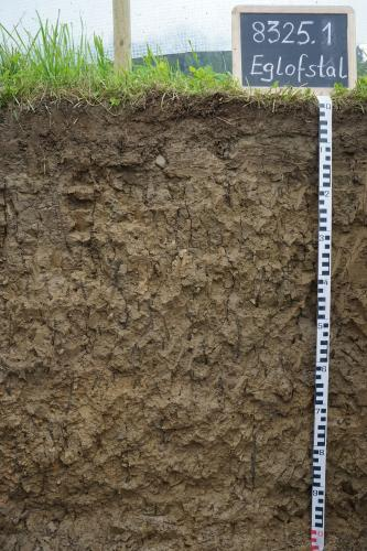 Das Foto zeigt ein Bodenprofil unter Grünpflanzen. Es handelt sich um ein Musterprofil des LGRB. Das gleichmäßig braun gefärbte Profil ist 1 m tief.