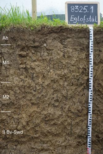 Das Foto zeigt ein Bodenprofil unter Grünpflanzen. Es handelt sich um ein Musterprofil des LGRB. Das in vier Horizonte unterteilte, gleichmäßig braun gefärbte Profil ist 1 m tief.