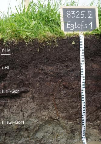 Das Foto zeigt ein Bodenprofil unter Grünland. Es handelt sich um ein Musterprofil des LGRB. Das in vier Horizonte unterteilte, schwarzbraune Profil ist etwa 80 cm tief. Am Boden steht Wasser.