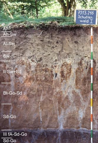 Das Foto zeigt ein Bodenprofil des LGRB unter Wald. Das in neun Horizonte gegliederte Profil hat eine Tiefe von 1,50 m. Rechts oben zeigt eine Tafel den Namen und die Nummer des Profils an.