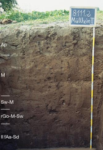 Das Foto zeigt ein Bodenprofil unter Acker. Es handelt sich um ein Musterprofil des LGRB. Das in fünf Horizonte gegliederte Profil ist 1,60 m tief.