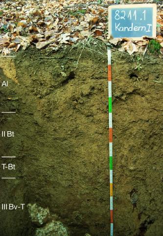 Musterprofil von grünlich-braunem Boden unter belaubtem Waldboden. An der linken Bildseite sind die Bodenhorizonte eingezeichnet, mittig rechts befindet sich ein Maßstab und ein Schild mit Beschriftung.