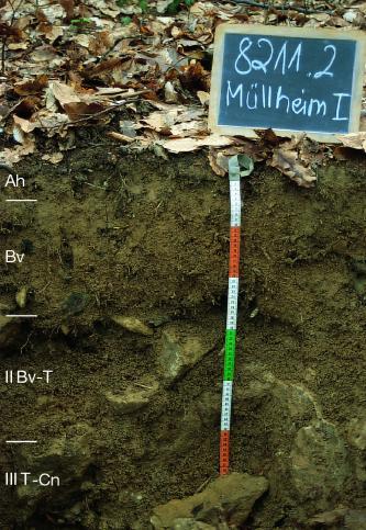 Musterprofil eines dunkelbraunen, große Gerölle enthaltenden Bodens unter belaubtem Waldboden. Links sind die Bodenhorizonte eingezeichnet, mittig befindet sich ein bunter Maßstab mit einer beschrifteten Kreidetafel darüber.