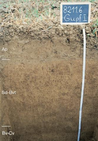 Auf dem Bild ist das Musterprofil Gupf 1 zu sehen. Am rechten Rand ist ein Maßstab sowie eine Kreidetafel mit der Nummer des Profils zu sehen, am linken Rand die Unterteilung in die Horizonte. Der Boden ist anfangs hellbraun und wird dunkelbrauner.