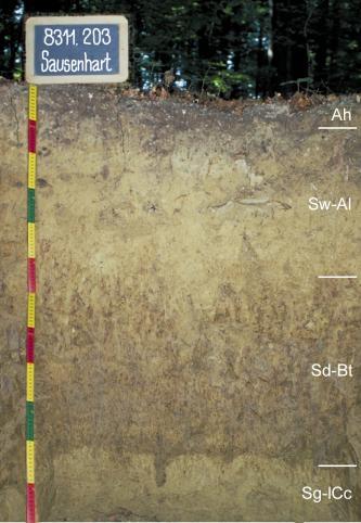 Musterprofil eines Bodens mit hellbraunen bis gräulichen Horizonten. Links befindet sich ein bunter Maßstab mit einem beschrifteten Schild darüber, rechts die Beschreibung der einzelnen Horizonte.