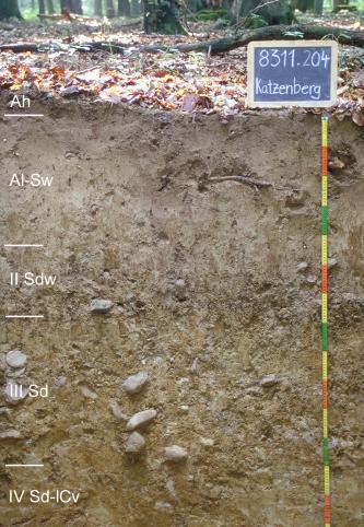 Musterprofil eines hell- bis mittelbraunen Bodens. In der unteren Hälfte ist der Boden geröllführend. Am linken Bildrand befinden sich Beschriftungen der Bodenhorizonte, rechts ein bunter Maßstab und darüber ein Schild mit Beschriftung.