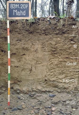 Das Foto zeigt ein Bodenprofil unter Wald. Es handelt sich um ein Musterprofil des LGRB. Das in fünf Horizonte unterteilte Profil ist über 1,20 m tief.