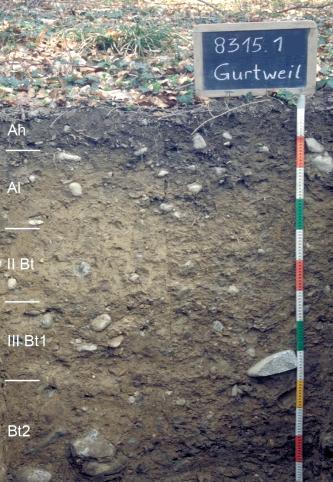 Musterprofil von graubrauner Farbe unter Laub. Links am Rand sind fünf Horizonte eingezeichnet. Rechts im Bild zeigt eine Tafel den Namen und die Nummer, ein Maßband die Tiefe des Profils an.