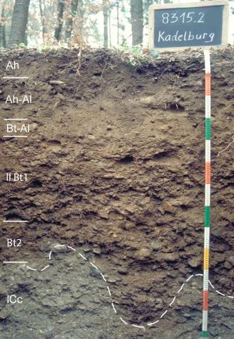 Musterprofil von rötlich braunem, im unteren Teil grauem Boden unter Wald. Links sind sechs Horizonte eingezeichnet, der unterste ist durch eine wellige Linie markiert. Rechts gibt eine Tafel Namen und Nummer, ein Maßband die Tiefe des Profils an.