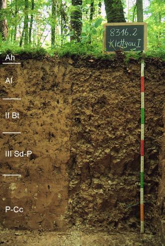 Musterprofil von rötlich braunem Boden im Wald. Links am Rand sind fünf Bodenhorizonte eingezeichnet. Rechts zeigt eine Tafel Namen und Nummer, ein Maßband die Tiefe des Profils an.