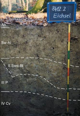 Musterprofil eines unten schwarz bis oben braunen Bodens unter Wald. Links sind die Bodenhorizonte eingezeichnet, entsprechende Trennlinien ziehen sich quer durch das Bild. Rechts befindet sich ein Maßstab mit einer Tafel mit Beschriftung darüber.