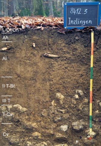 Musterprofil eines dunkelbraunen, in der unteren Hälfte geröllführenden Bodens unter Wald. Links befinden sich Beschriftungen der einzlnen Bodenhorizonte, rechts ein bunter Maßstab mit einer Kreidetafel mit Beschriftung darüber.