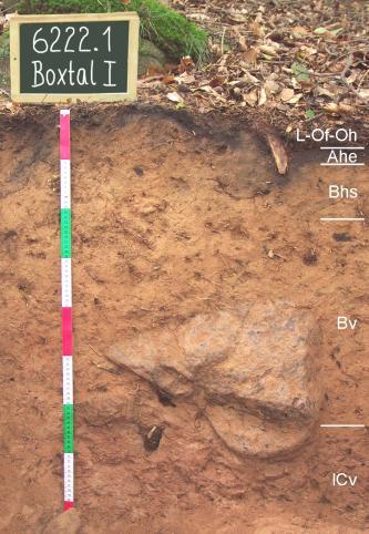 Das Foto zeigt ein aufgegrabenes Bodenprofil unter Laub. Das Profil ist durch eine beschriftete Kreidetafel als Musterprofil des LGRB ausgewiesen. Das leicht rötliche, hellbraune Profil führt in mittlerer Tiefe einen großen Gesteinsblock.