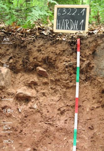 Das Bild zeigt ein aufgegrabenes Bodenprofil unter Wald. Das Profil ist durch eine beschriftete Kreidetafel als Musterprofil des LGRB ausgewiesen. Das hellbraune Profil ist 75 cm tief.