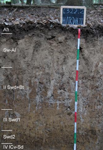 Das Bild zeigt ein aufgegrabenes Bodenprofil unter Wald. Das Profil ist durch eine beschriftete Kreidetafel als Musterprofil des LGRB ausgewiesen. Das bräunlich graue Profil ist 1,20 m tief.
