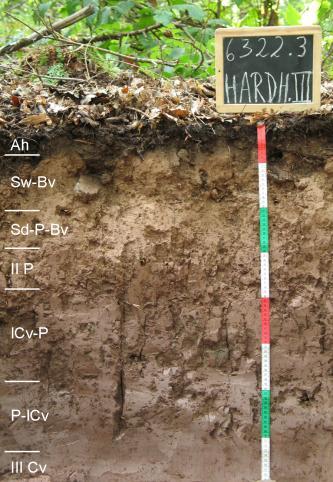 Das Bild zeigt ein aufgegrabenes Bodenprofil unter Wald. Das Profil ist durch eine beschriftete Kreidetafel als Musterprofil des LGRB ausgewiesen. Das graubraune Profil ist 80 cm tief.