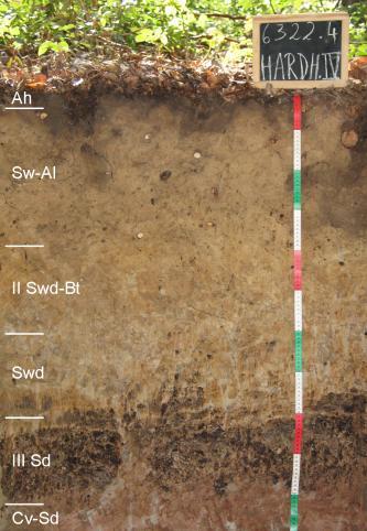 Das Foto zeigt ein aufgegrabenes Bodenprofil unter Wald. Das Profil ist durch eine beschriftete Kreidetafel als Musterprofil des LGRB ausgewiesen. Das zu zwei Dritteln hellbraune Profil ist 1,10 m tief.