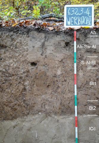 Das Bild zeigt ein Bodenprofil unter Wald. Das Profil ist durch eine beschriftete Kreidetafel als Musterprofil des LGRB ausgewiesen. Das bräunlich graue Profil ist über 1 m tief.