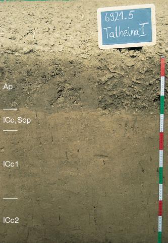 Das Foto zeigt ein Bodenprofil unter kahlem Acker. Es handelt sich um ein Musterprofil des LGRB. Das in vier Horizonte gegliederte Profil ist über 1 m tief.