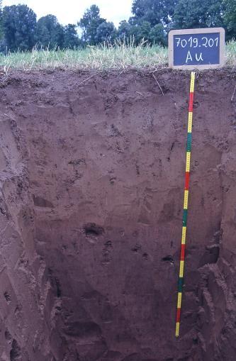 Blick in ein aufgegrabenes Bodenprofil auf einer Wiese am Waldrand. Es handelt sich dabei um ein Musterprofil des LGRB. Das Profil ist über 150 cm tief und von dunkler, violetter Farbe.