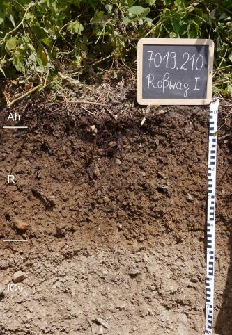 Das Foto zeigt ein Bodenprofil unter Pflanzenbewuchs. Es handelt sich um ein Musterprofil des LGRB. Das in drei Horizonte gegliederte Profil ist 80 cm tief.