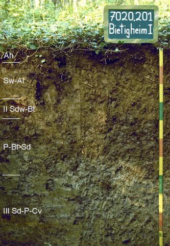 Das Foto zeigt ein Bodenprofil unter Wald. Es handelt sich um ein Musterprofil des LGRB. Das in fünf Horizonte gegliederte Profil ist 110 cm tief.