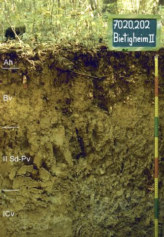 Das Foto zeigt ein Bodenprofil unter Wald. Es handelt sich um ein Musterprofil des LGRB. Das in vier Horizonte gegliederte Profil ist 90 cm tief.