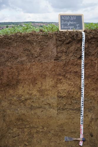 Das Foto zeigt ein Bodenprofil unter Acker. Es handelt sich um ein Musterprofil des LGRB. Das Profil ist 1,20 m tief.