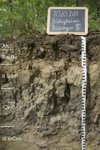 Das Bild zeigt ein Bodenprofil unter Wald. Es handelt sich um ein Musterprofil des LGRB. Das schwärzlich braune Profil ist 80 cm tief und in fünf Horizonte unterteilt.