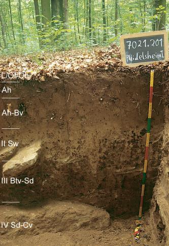 Das Foto zeigt ein aufgegrabenes Bodenprofil unter Wald. Es handelt sich um ein Musterprofil des LGRB. Das in sechs Horizonte gegliederte Profil ist bis zum sichtbaren Boden 110 cm tief.
