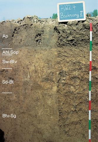 Das Bild zeigt ein Bodenprofil unter Acker. Es handelt sich um ein Musterprofil des LGRB. Das in fünf Horizonte gegliederte Profil ist 1,20 m tief.