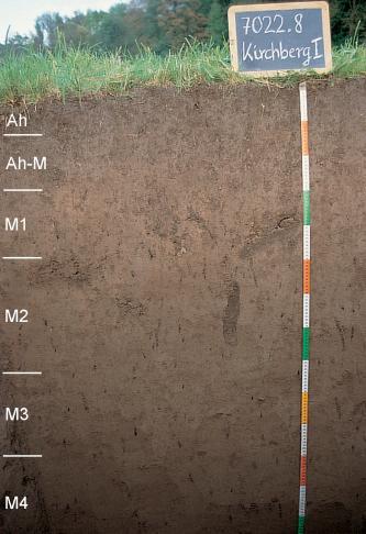 Das Foto zeigt ein Bodenprofil unter Grünland in Waldnähe. Es handelt sich um ein Musterprofil des LGRB. Das sechs Horizonte umfassende Profil ist 145 cm tief.