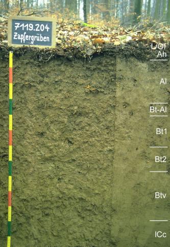 Das Foto zeigt ein Bodenprofil unter Wald. Es handelt sich um ein Musterprofil des LGRB. Das in acht Horizonte gegliederte, olivbraune Profil ist 1,30 m tief.