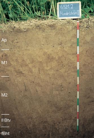 Das Foto zeigt ein Bodenprofil unter Acker. Es handelt sich um ein Musterprofil des LGRB. Das in fünf Horizonte gegliederte Profil ist über 1,50 m tief.