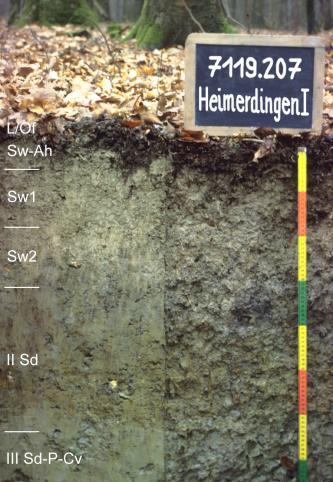 Das Foto zeigt ein Bodenprofil unter Wald. Es handelt sich um ein Musterprofil des LGRB. Das fünf Horizonte umfassende Bodenprofil ist über 70 cm tief.
