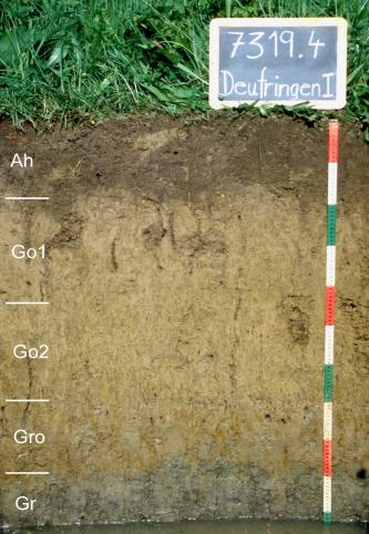 Das Foto zeigt ein Bodenprofil unter Grünland. Es handelt sich um ein Musterprofil des LGRB. Das fünf Horizonte umfassende Profil ist über 1 m tief; am Boden steht Wasser.