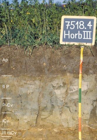 Das Foto zeigt ein Bodenprofil unter Acker mit Pflanzenwuchs. Es handelt sich um ein Musterprofil des LGRB. Das fünf Horizonte umfassende Profil ist über 60 cm tief.