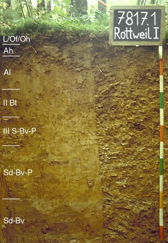 Das Foto zeigt ein Bodenprofil unter Wald. Es handelt sich um ein Musterprofil des LGRB. Das sechs Horizonte umfassende Profil ist 1,20 m tief.